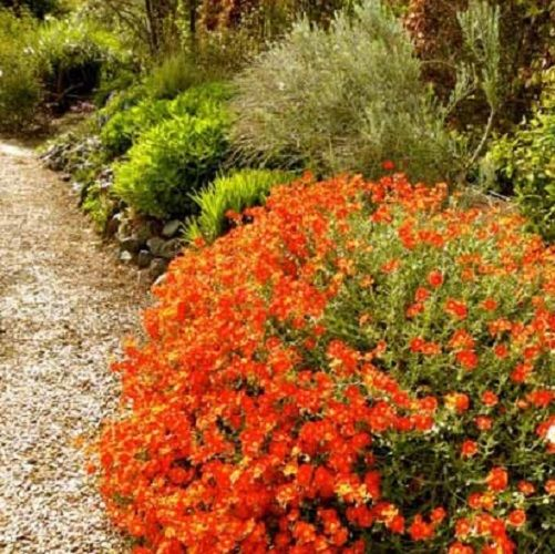 Niezawodny Dlugo Kwitnacy Poslonek Roza Skalna 8002793960 Allegro Pl Plants Garden Plants Sands Soils