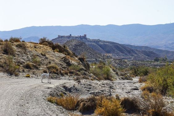 This morning we drove to Tabernas with the intention of exploring the desert landscape. We know the town and everybody has heard of its tourist attractions, the wild west villages built for the spa…