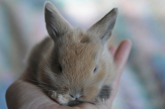 {baby bunny in hand} swoon.