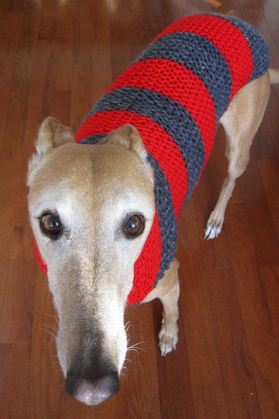 Knitting Pattern For Whippet Coat : Pinterest   The world s catalog of ideas