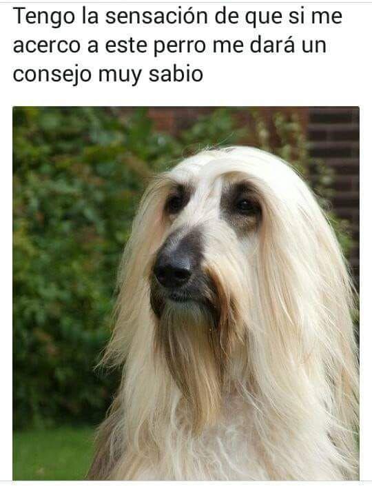 Perros Y Gatos Famosos Cuento Perros Dogs Fotos De Memes Divertidos Memes Divertidos Memes