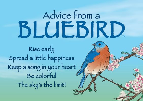 "Advice from a Bluebird, ""Spread a little happiness."" #magnet #nature #quotes"