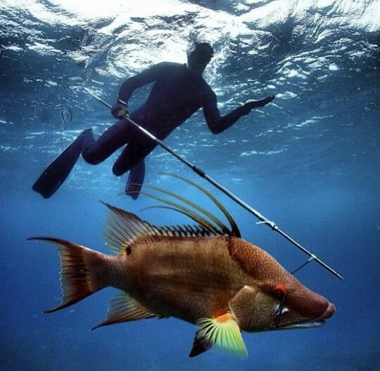 Hogfish in the florida keys by far the best tasting fish for Florida game fish