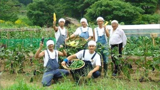 TOKIO鉄腕ダッシュの企画で野菜を収穫する壁紙