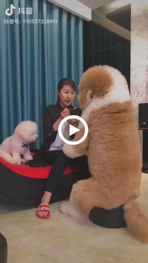 Jovem alimentando seus cãozinhos