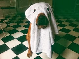 "My ""Treat Dreams"": Halloween Dog Costume Ideas"