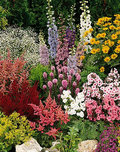 About Perennial Plants
