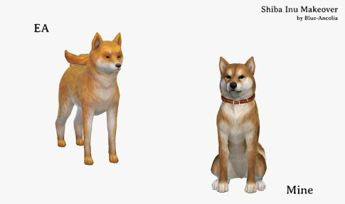 Blue Ancolia Requested By Anonymous Shiba Inu Makeover Here Sims Pets Sims 4 Pets Sims 4 Challenges