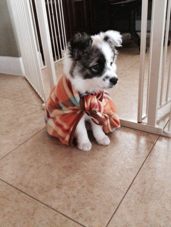 Border collie mix puppy