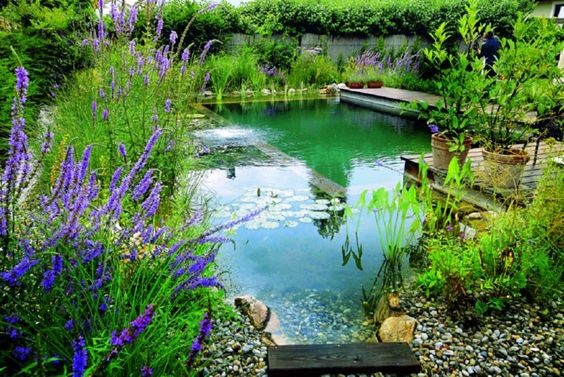 Natural pools use plants to filter water. Can be used for Ice Skating in winter months: http://inspirationgreen.com/natural-pools-swimming-ponds.html
