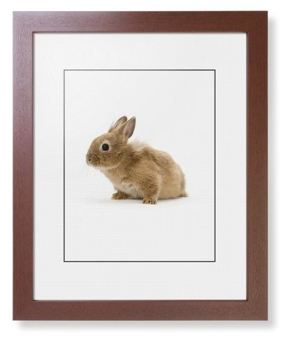 Bunny Framed Print, Brown, Contemporary, Black, White, Single piece, 11 x 14 inches