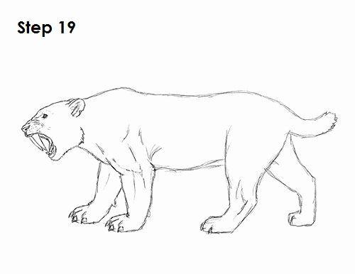 Saber Tooth Tiger Coloring Page Elegant Smilodon Pages Coloring Pages In 2020 Smilodon Sabertooth Tiger Drawing