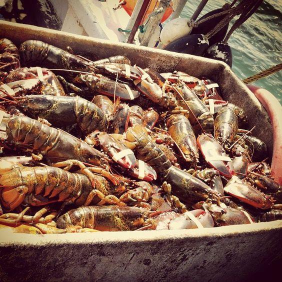 Maine lobstah!