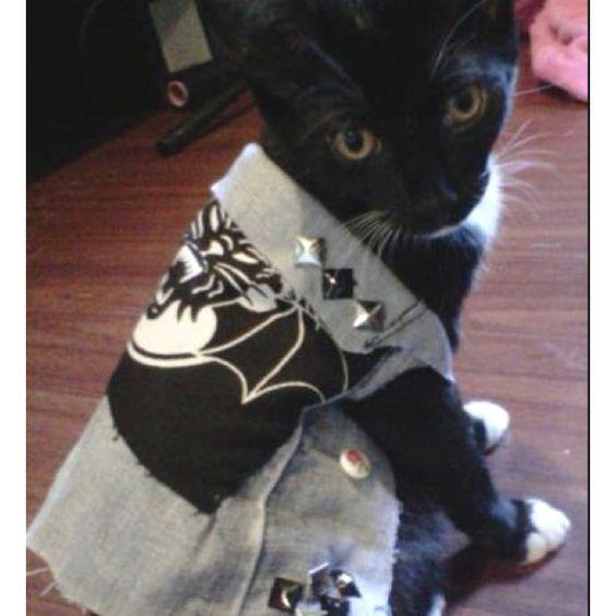 Heavy metal kitty!