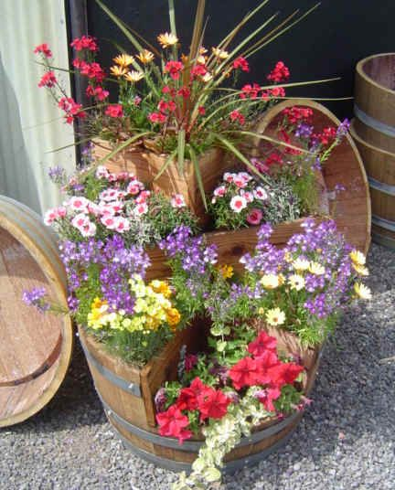 Flowers in wine barrels