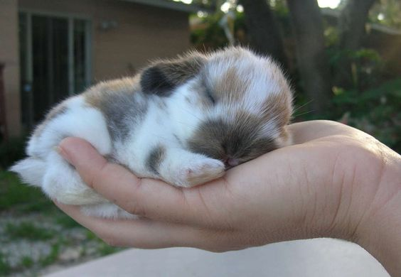 Not sure why the title is talking about ice cubes...but this little guy is precious! I want him!