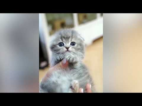 Cats Need Peaceful Time Really Cute Cat Videos Youtube Cute
