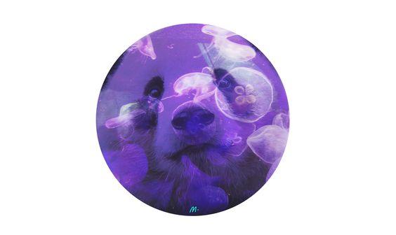 Panda bear #Pandabear #jellyfish