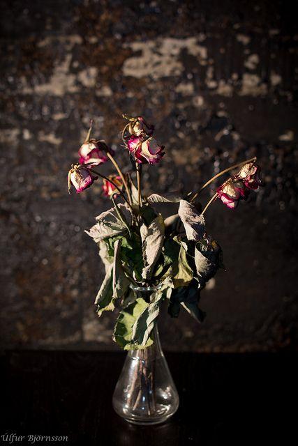 Dead roses by Úlfur Björnsson, via Flickr
