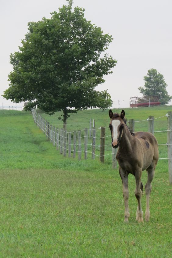 Foal, Lancaster County
