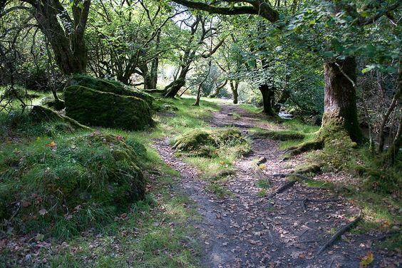 Belstone Cleave,Dartmoor.