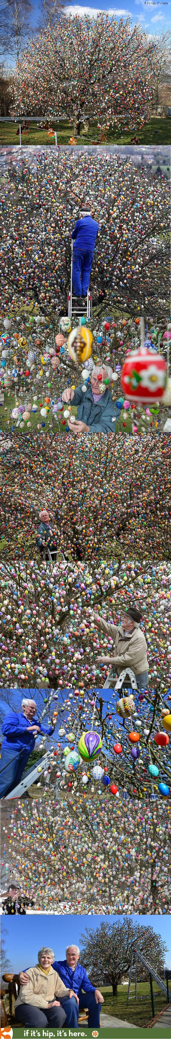 The Easter Egg Tree. This German Couple has been decorating their apple tree with up to 10,000 eggs for the past 50 years. 2015 is the last year they will honor this old tradition. Learn more at http://www.ifitshipitshere.com/2015-volker-kraft-easter-egg-tree/: