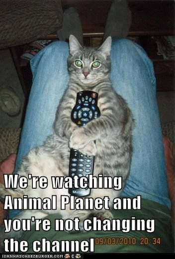 the remote is like a kings scepter the one who holds it has authority in the house...(cat rules ha ha)