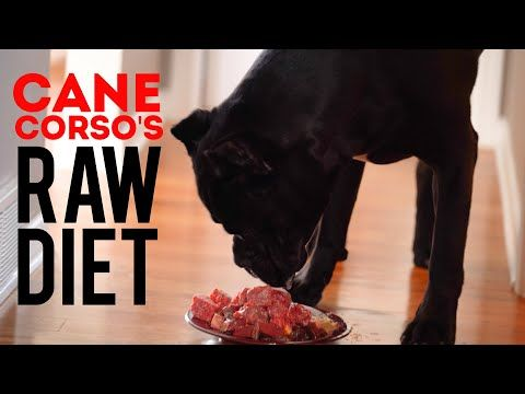 Cane Corso S Raw Diet Youtube In 2020 Raw Diet Cane Corso Raw Dog Food Recipes