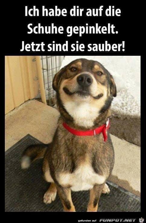 Pin Von Zuzia Piela Auf Koty Katzen Lustige Spruche Hund Witze Lustige Hund Bilder