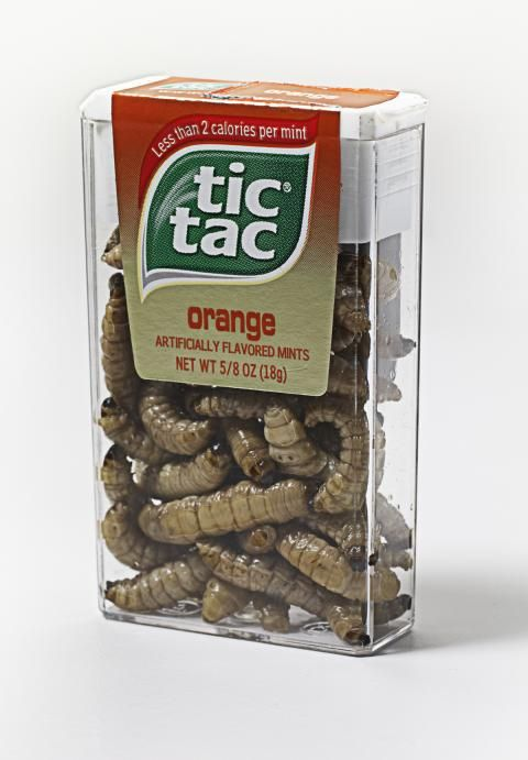 Tic tac bait and ice fishing on pinterest for Fishing worm box