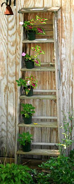 Add height in your garden by using an old ladder as shelves for potted plants.   http://www.buffalo-niagaragardening.com/2012/05/01/potpourri-gardening-tips-and-news-too-good-to-miss/
