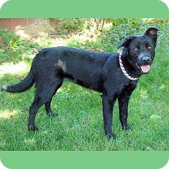 Red Bluff, CA - Labrador Retriever Mix. Meet MARTI a Dog for Adoption.