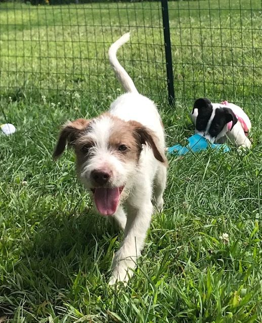 Adopt Victoria On Homeless Pets Help Homeless Pets Dog Adoption
