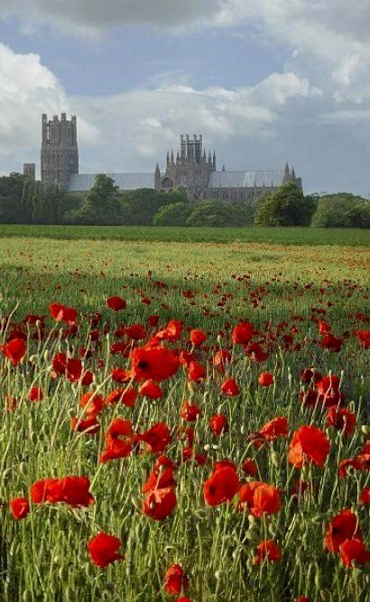 field of red poppys with Ely Cathedral, Cambridgeshire, England in the background