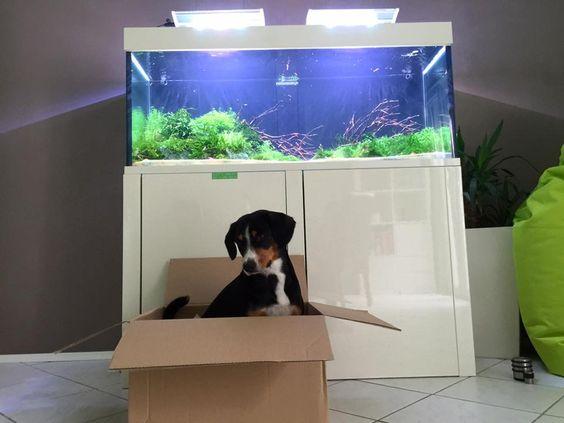 Welthundetag 2016 - Bürohund Zhoe
