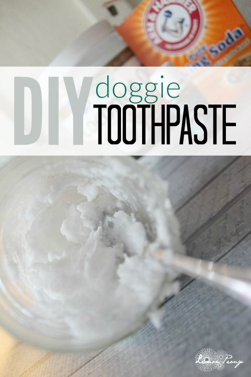 DIY Doggie Toothpaste! Fresh Dog Breath Tips and How to Clean your Dog's Teeth!