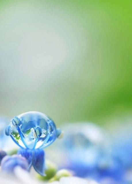 Marvelous One-Off Water Drop Photo