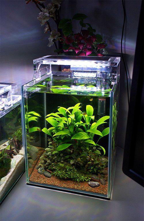 20highcube Fishtank 170329 Betta Aquarium Mini Aquarium Aquascape Aquarium