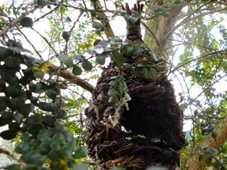 Why, When & How to Attract Wild Birds to Your Garden.