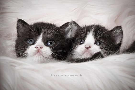 two beauties by Jessica Lipki on 500px