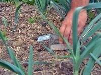Chasser les mulots de son jardin (Fiches conseils)