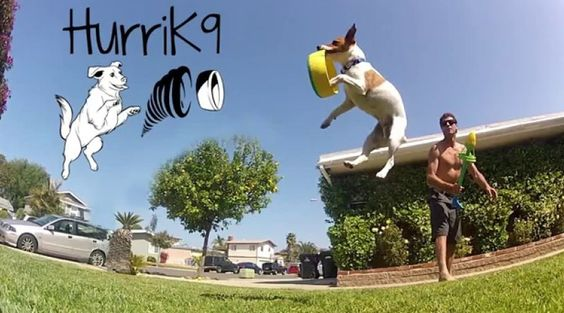 HurriK9: 100-feet flying fetch toy encourages dogs to play
