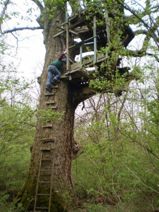 Amazing Tree House Ideas You Need To See Cool Tree Houses