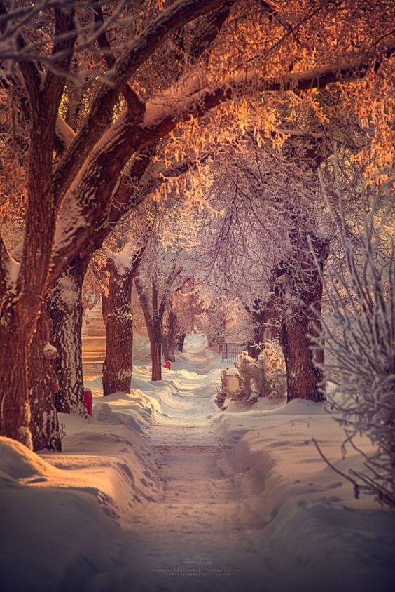 Fotografía Winter Walk por Ian McGregor en 500px
