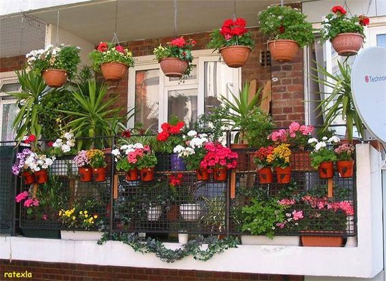 balcony gardens photos beautiful balcony gardens kerala home design architecture house