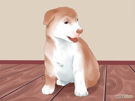 4 Ways to Train Puppies - wikiHow