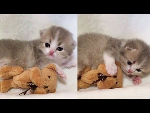 Try Not To Laugh Or Smile Funny Cats And Cute Kittens Videos 13 Youtube Cute Kitten Gif Kittens Cutest Kittens Funny