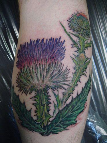 thistles thistle tattoo and tat on pinterest. Black Bedroom Furniture Sets. Home Design Ideas