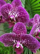 Orchids https://thegardendiaries.wordpress.com/2015/02/21/northwest-flower-garden-highlights/