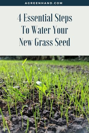 Watering New Grass Seed Grass Seed Gardening Tips Water Grass